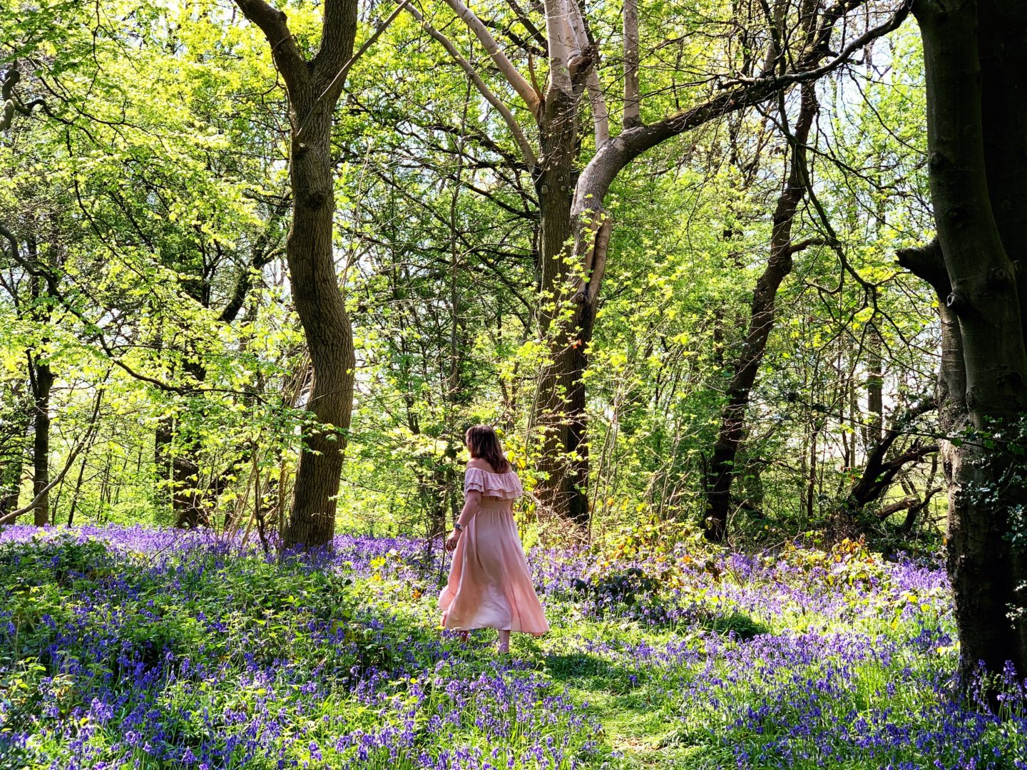 The magic of Bluebell Woods