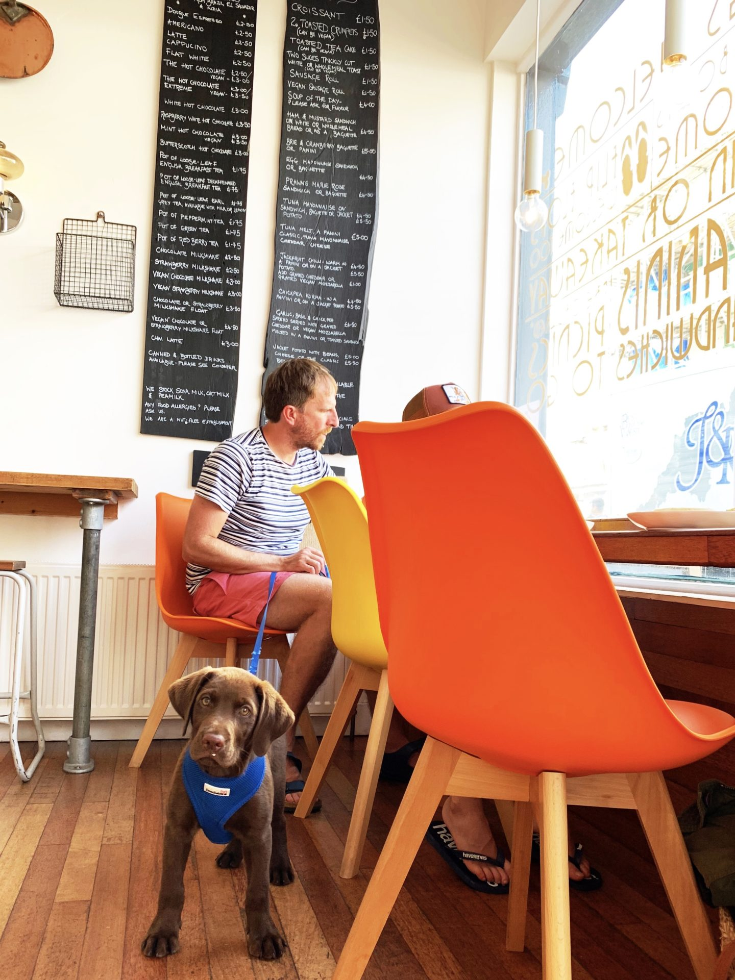 15 dog friendly places to eat and drink in North Devon